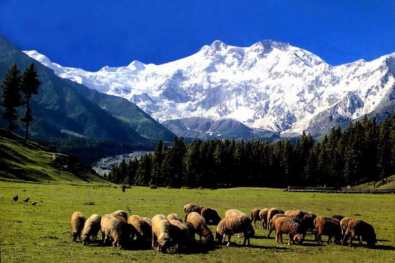 Fairy Meadows Gilgit Baltistan Promoting Culture And Tourism